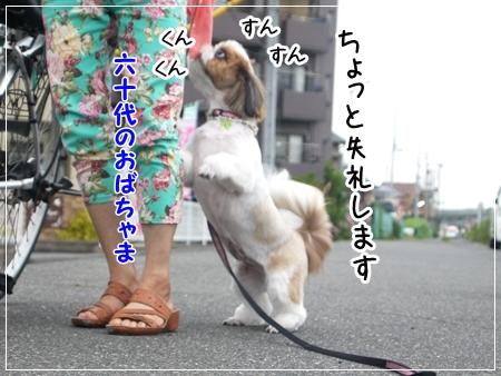 P1050109_1.jpg