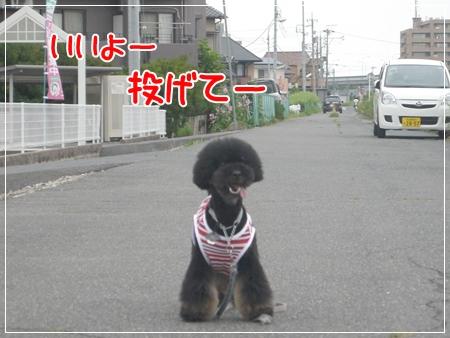 P1050116_1_20140709201210122.jpg