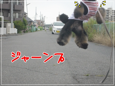 P1050119_1_20140709201213f00.jpg