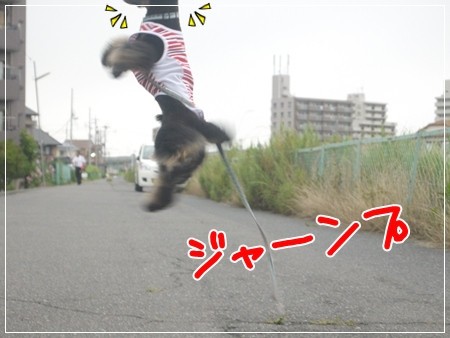 P1050127_1_201407092012149d1.jpg