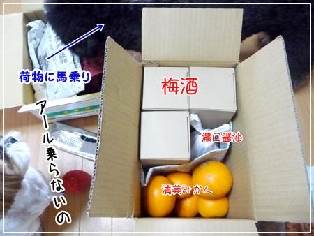 P1050198_2.jpg