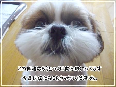 P1050314_1.jpg