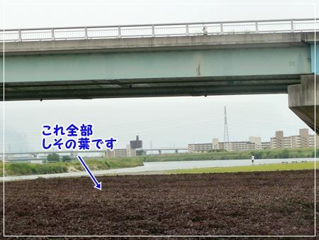 P1050339_1.jpg