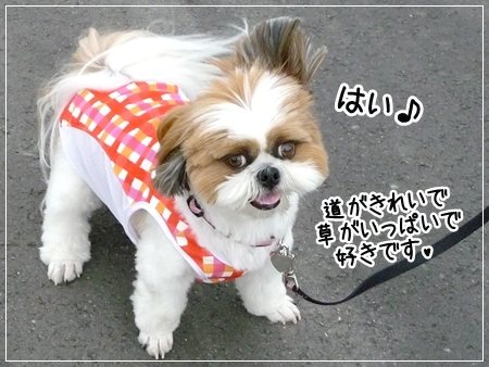 P1050361_1.jpg