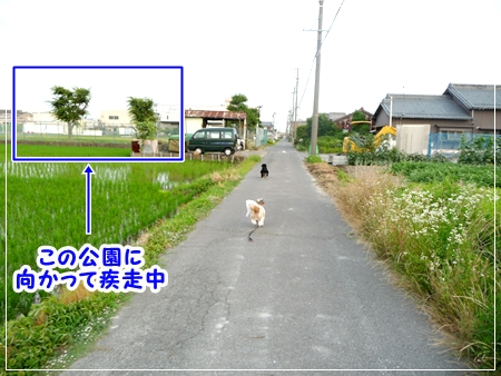 P1050415_1.jpg