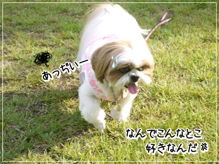 P1050539_1.jpg