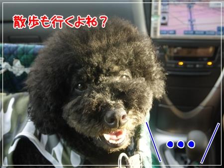 P1050544_1.jpg
