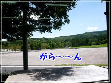 P1050978_1.jpg