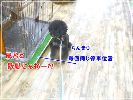 P1060013_1.jpg