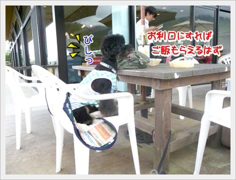 P1060548_1.jpg