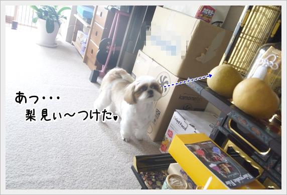 P1060649_1.jpg