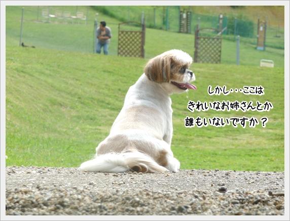 P1070027_1.jpg