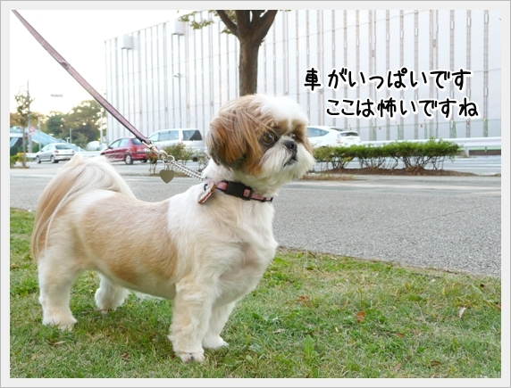 P1070146_1.jpg