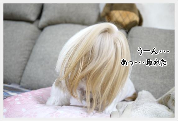 P1070396_1.jpg