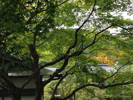 entsuji3.jpg