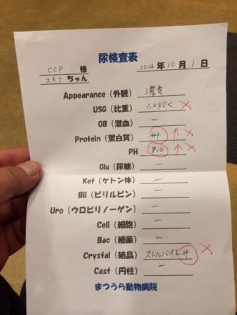 ユキナ尿検査結果表