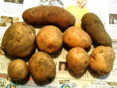 0822ya_potato.jpg