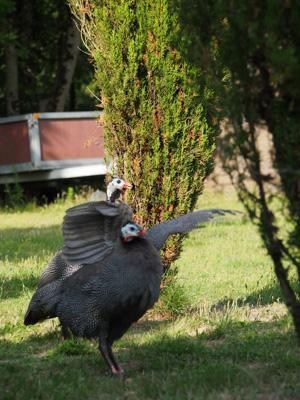 OiseauxAout201411