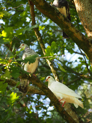 OiseauxAout201413