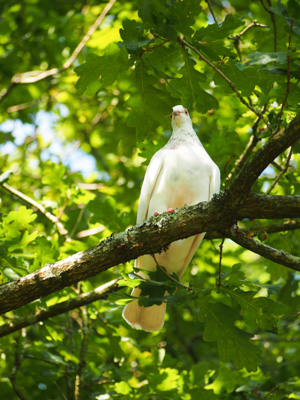 OiseauxAout201417