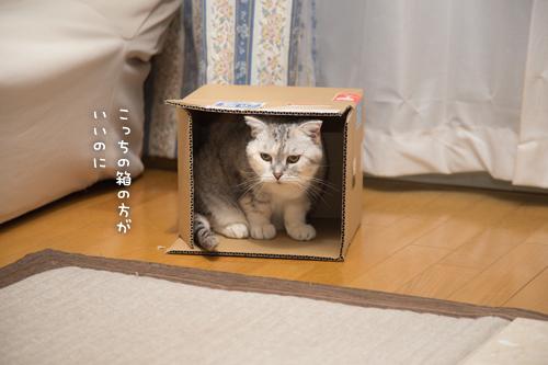 こっちの箱のほうが