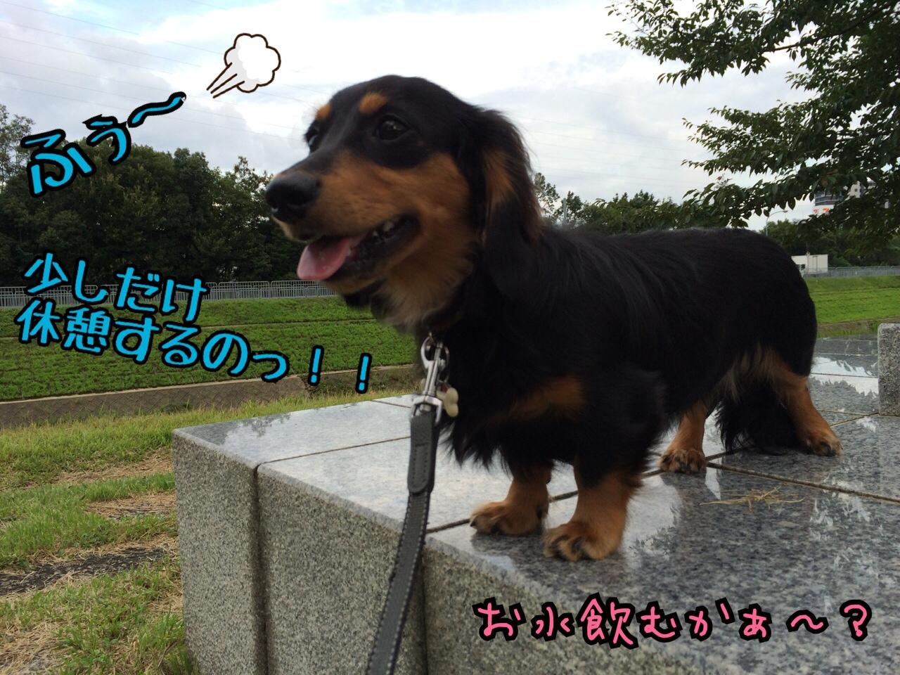 fc2blog_201408290547415bf.jpg