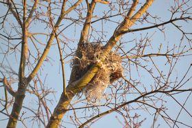 011鳥の巣