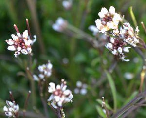 011種漬花