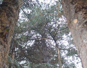 004にゃんたの木