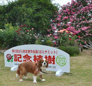 001バラ公園1