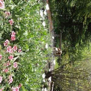 DSC09408温泉前花壇