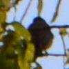 001鳥シルエット1