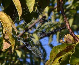 006蜘蛛の巣1