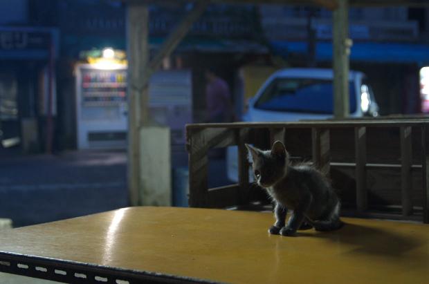 市場の猫2