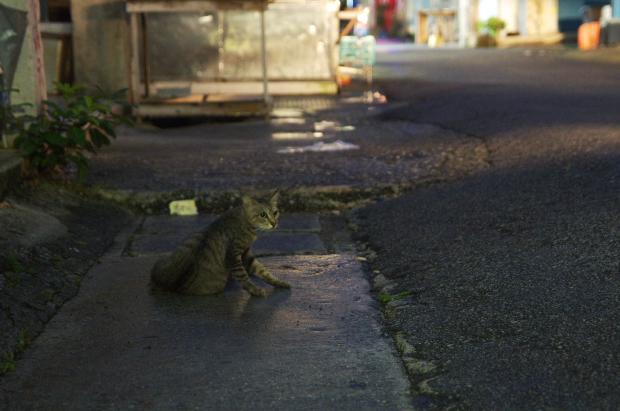 市場の猫3