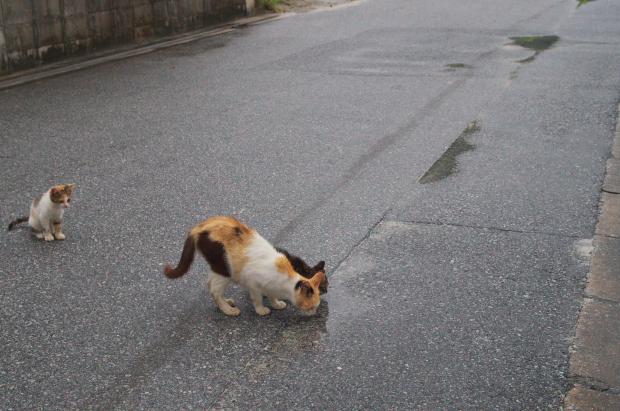 tokashiki2_20140723160430da5.jpg