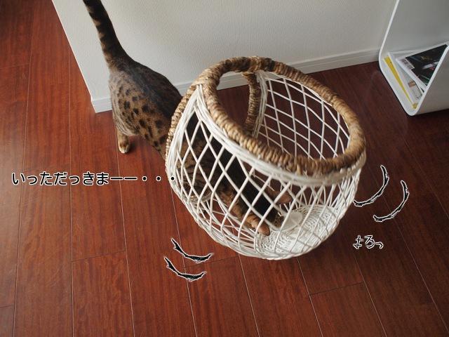 ベンガル猫2