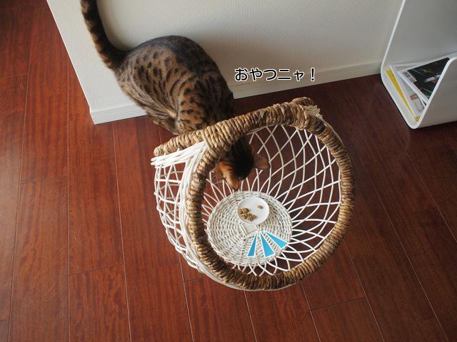 ベンガル猫3