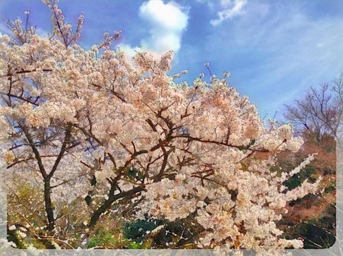 写真 2014-04-09 26 42 (1), 17 47 02th_