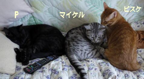 sofacats