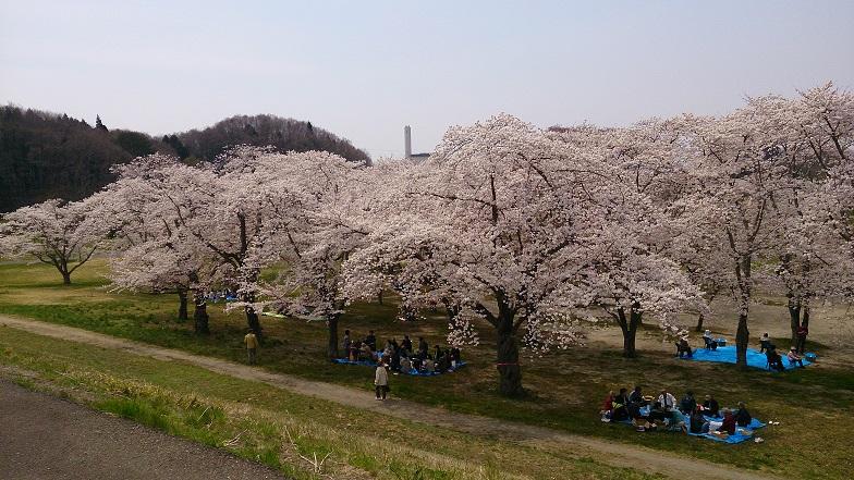 加瀬沼桜2014-6