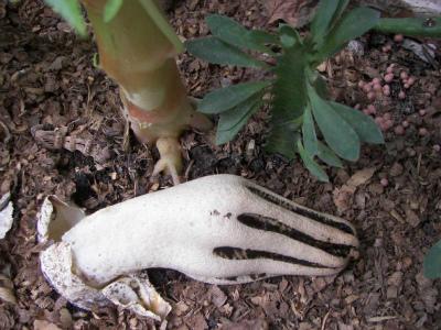 Zombie-mushroom-hand.jpg