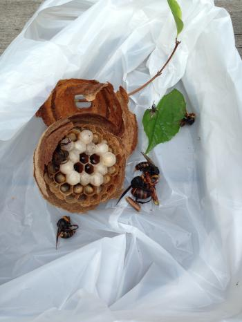 蜂の巣なかみ