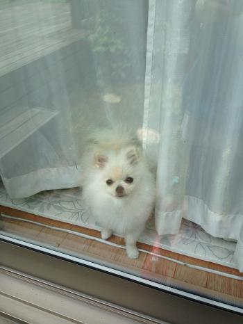 窓から見てる