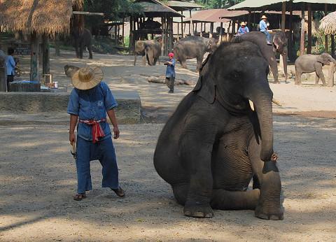 象のご挨拶