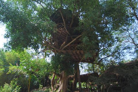 樹上ハウスが