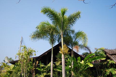 ココナッツヤシの木とバナナ