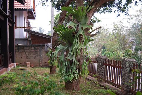 ホテルの前庭の植物が