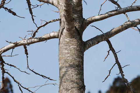 これ何の木?3