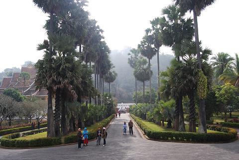 王宮の並木